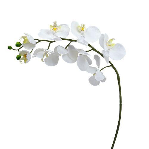 Moth orchid 75cm white
