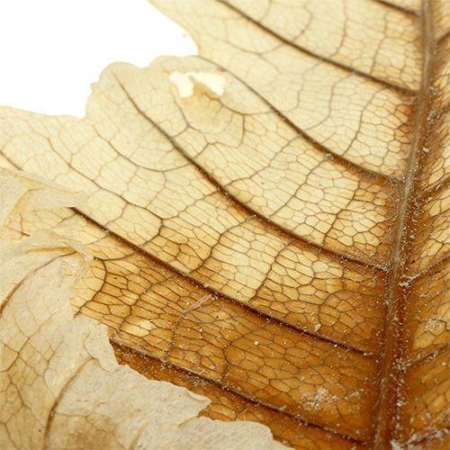 Oak Leaf bleached 35p