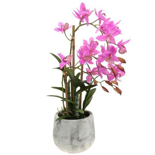 Orchid in violet pot H55cm
