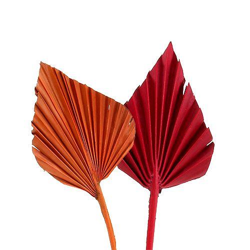 Palmspear mini ass. Red / orange 100pcs