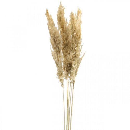 Dry decoration pampas grass, dried, bleached 70-75cm 6 stems
