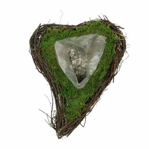 Plant heart vine, moss 22cm x 28cm H8cm