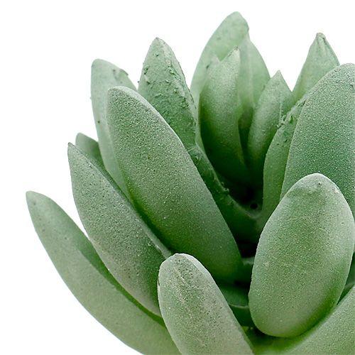 Succulent Echeveria Ø6.5cm L11cm 6pcs