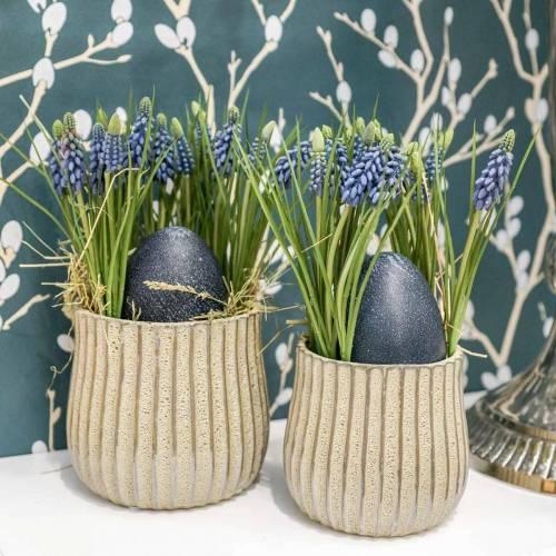 Grape hyacinths 28cm - 30cm blue 15pcs