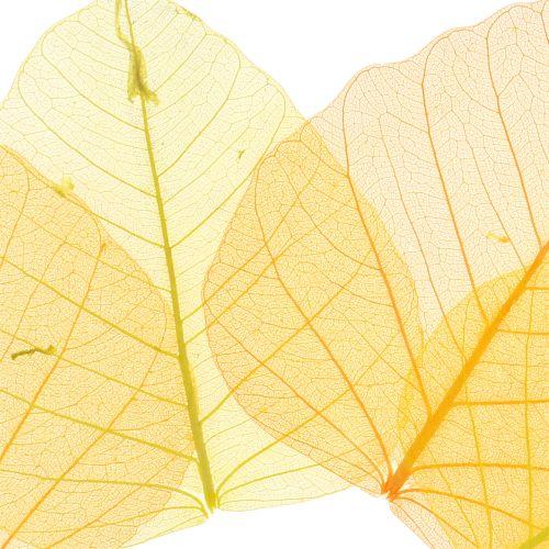 Willow leaves skeleton yellow, orange 200p