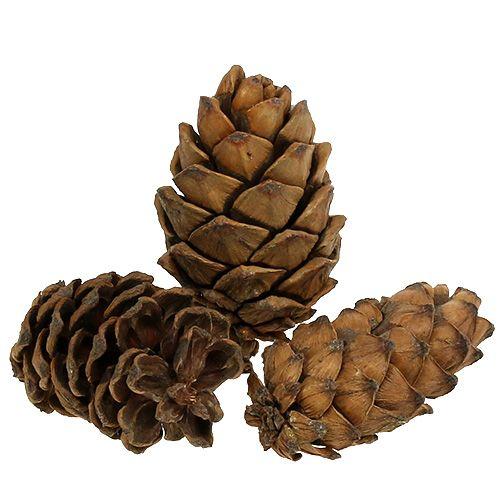 Cones natural 9cm - 10cm 6pcs